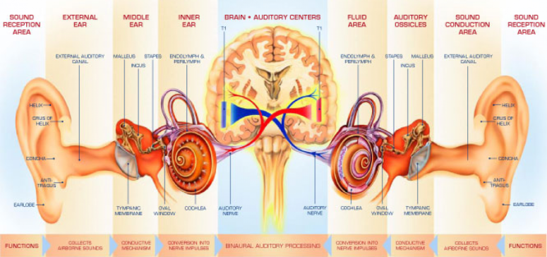 hearing zone audiology